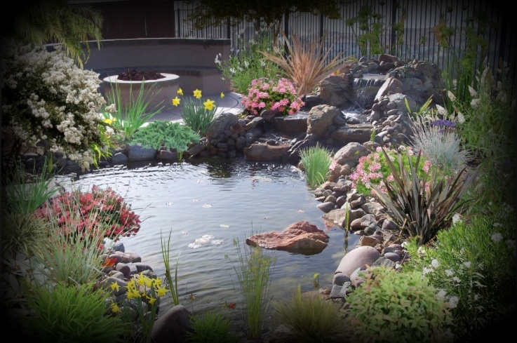 backyard pond with flowers and fountain